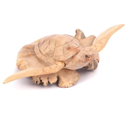 Turtle With Wings