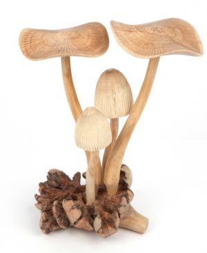 4 Large Flat Top Mushrooms