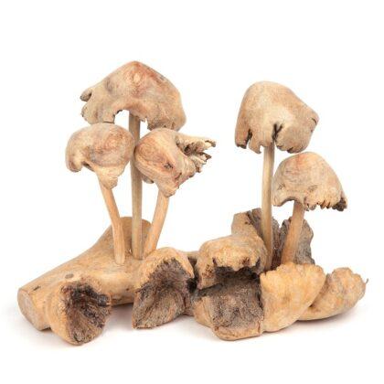 Double Mushrooms - 5