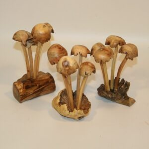4 Wild Mushrooms - Medium
